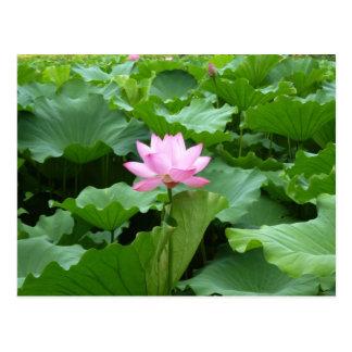 Carte postale de Lotus
