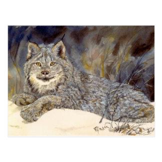 Carte postale de Lynx