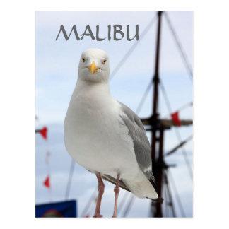 Carte postale de Malibu, de mouette et de bateau