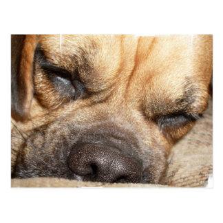Carte postale de mastiff de sommeil
