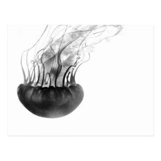 Carte postale de méduses (noire et blanche)