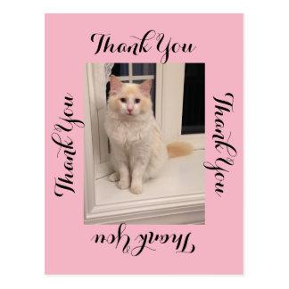 Carte postale de Merci de chat - rose