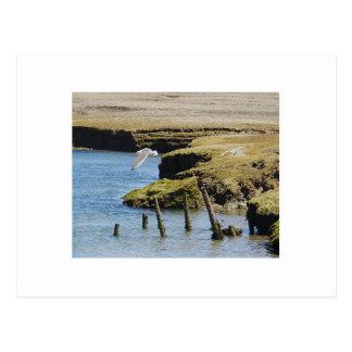 Carte postale de mouettes en vol