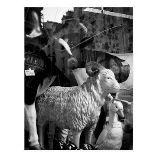 Carte postale de moutons de Daguerre de rue de