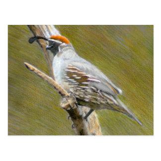 Carte postale de nature de beaux-arts des cailles