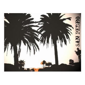 Carte postale de palmiers royaux de San Pedro