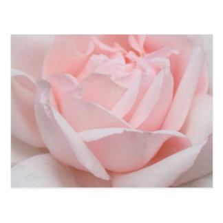 Carte postale de pétales de rose