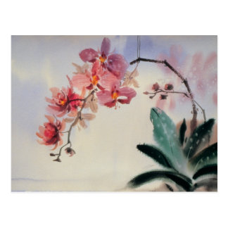 Carte postale de Phalaenopsis