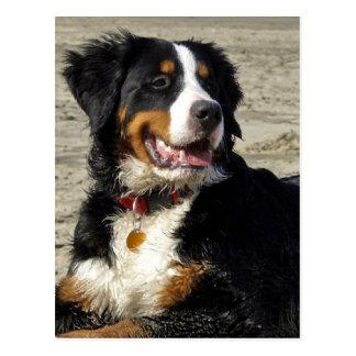 Carte postale de photo de chien de montagne de