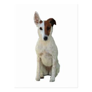 Carte postale de photo de chien lisse de Fox