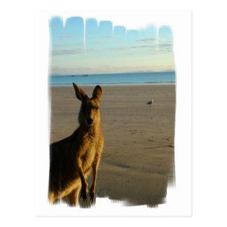 Carte postale de photo de kangourou