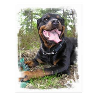 Carte postale de photo de rottweiler