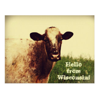 Carte postale de photo de vache au Wisconsin