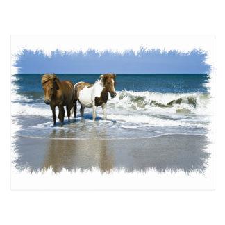 Carte postale de plage de cheval