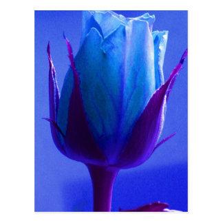 Carte postale de plaisir de rose de bleu -