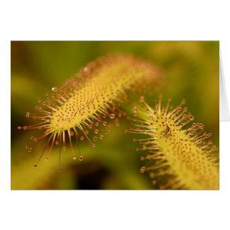 carte postale de plantes carnivores