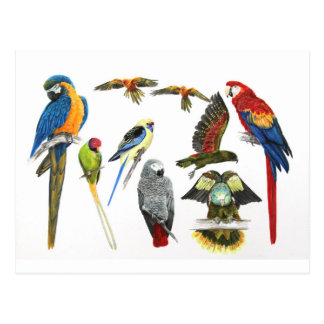 Carte Postale de plus en plus perroquets pour tous vos cadeaux