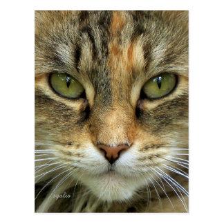 Carte postale de portrait de chat tigré