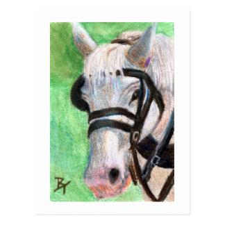 Carte postale de portrait de cheval