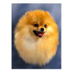 Carte postale de portrait de Pomeranian
