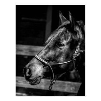 Carte postale de profil de cheval