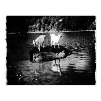 Carte postale de puissance de chèvre