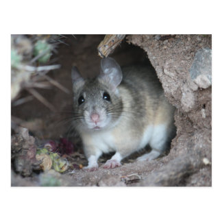 Carte postale de rat en bois