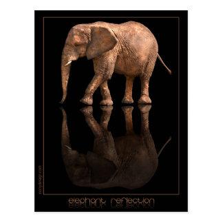 Carte postale de réflexion d'éléphant