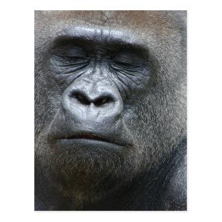 Carte postale de regard de gorille