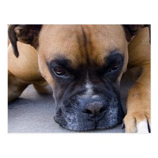 Carte postale de repos de chien de boxeur