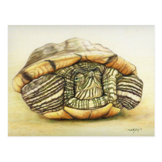 "Carte postale de reproduction d'art de ""tortue"""