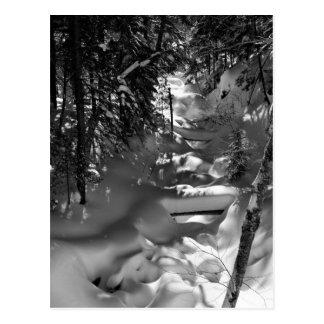 Carte postale de ressort d'érable - 1