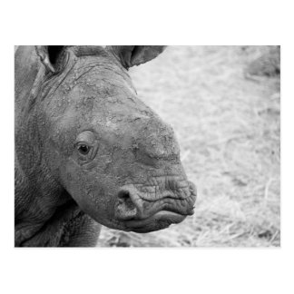 Carte postale de rhinocéros de bébé de BW