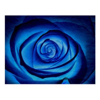 Carte postale de rose de bleu