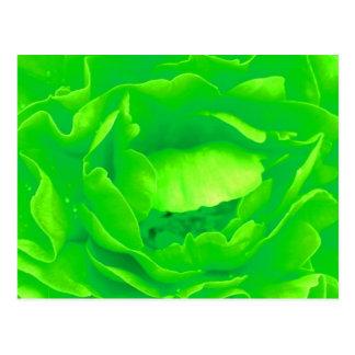Carte postale de rose vert - personnalisable