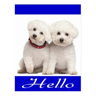 Carte postale de salutation de chiot de Bichon