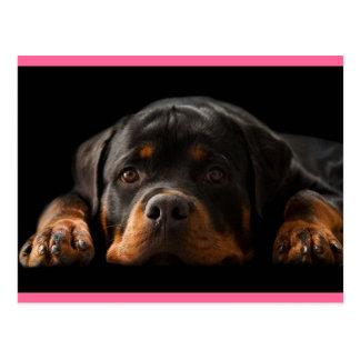 Carte postale de salutation de chiot de rottweiler