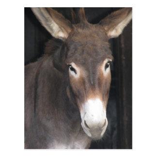 Carte postale de sanctuaire d'âne
