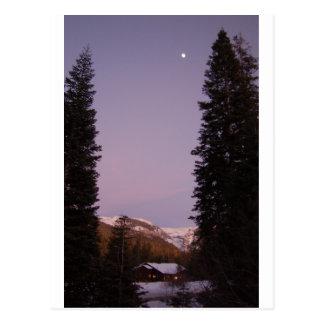 Carte postale de séquoia