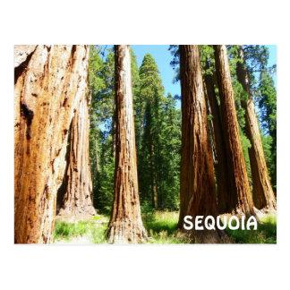 Carte postale de séquoia !