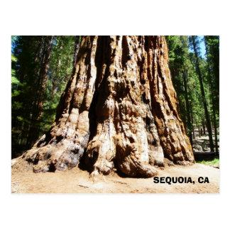 Carte postale de séquoia géant !