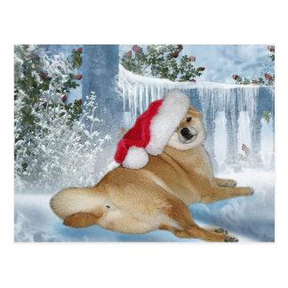Carte postale de Shiba Inu de Noël