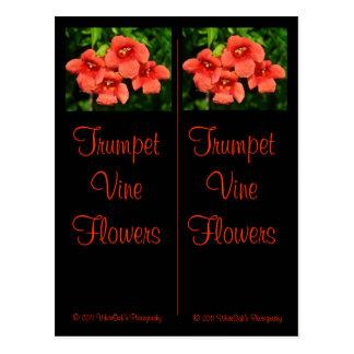Carte postale de signets de vigne de trompette