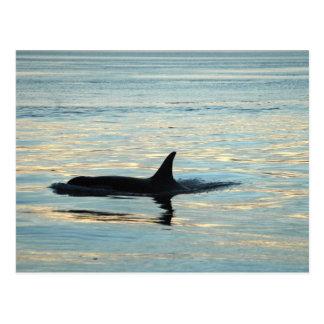 Carte postale de silhouette d'orque