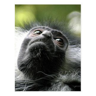 Carte postale de singe de Colobus du Rwanda