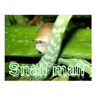 Carte postale de snail mail