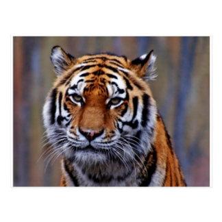 Carte postale de tigre de Bengale