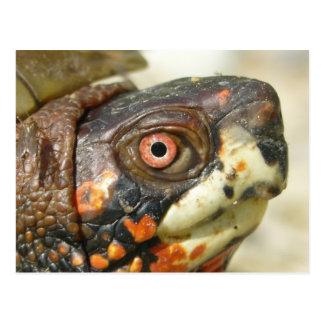Carte postale de tortue de boîte