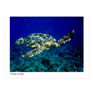 carte postale de tortue verte - 01