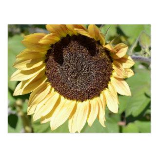Carte postale de tournesol de beauté d automne